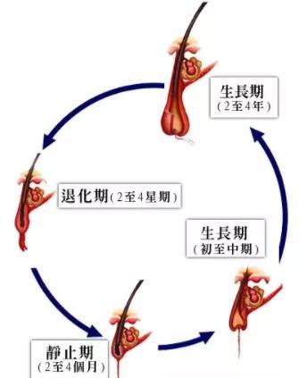 什么方法法能讓頭發快速長長?如何讓頭發快速生長